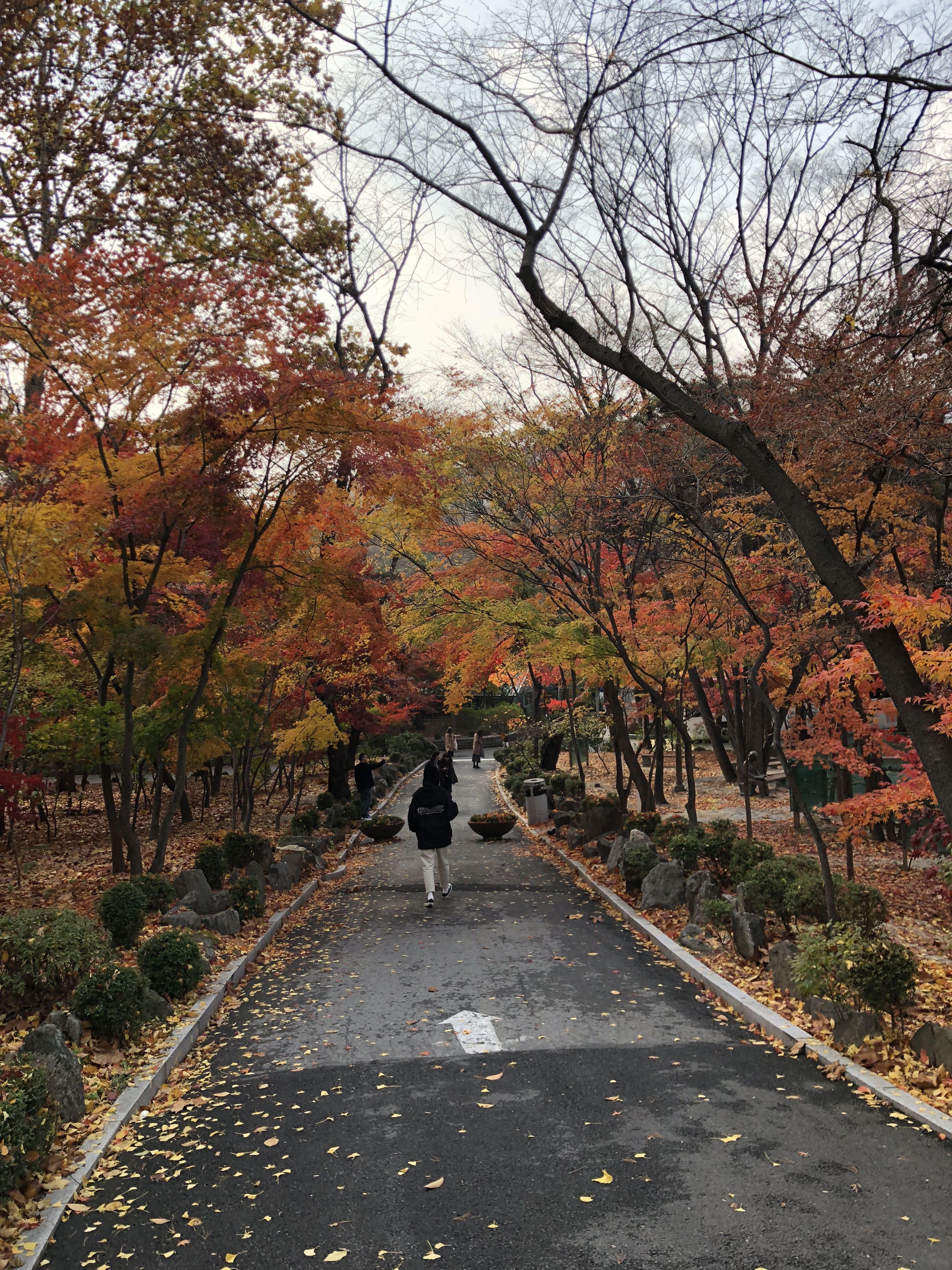 Kyung Hee University - campus photo 10